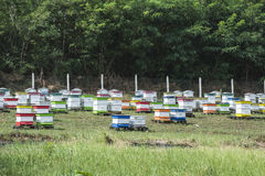 Beehives in bee farm. Forest of acacia trees. Bulgaria royalty free stock image