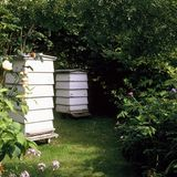 Beehives. In the corner of a garden royalty free stock images