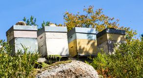 Beehives. And honey production in the north mountains of Portugal stock photos