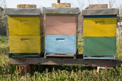 Beehives. Outdoors on the meadow stock photos