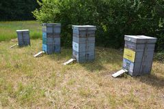 Beehives for beekeeping with many honey bees. Close up stock photo