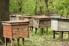 Beehives with bees in an apiary in the forest royalty free stock photo