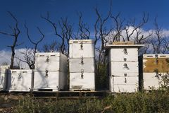 Beehives and Burnt Bush Stock Images
