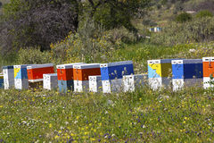 Beehives. Colorful wooden beehives in the field Stock Photos