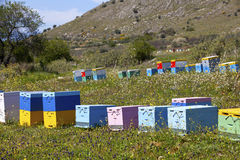Beehives. Colorful wooden beehives in the field Stock Photography