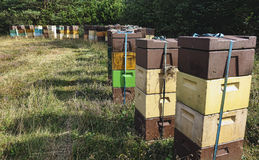 Beehives in a Danish meadow Royalty Free Stock Images