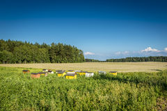 Beehives on ecological field Stock Photos