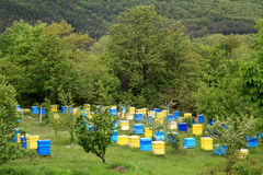 Beehives end spring trees Stock Photo