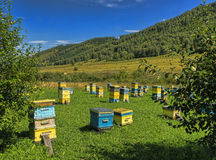 Beehives are exposed on a green glade in mountains Royalty Free Stock Photo