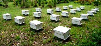 The Beehives farm Royalty Free Stock Photos