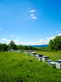 Beehives in the field. Colorful beehives on a green field, with bees flying Royalty Free Stock Photo