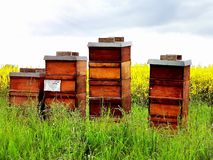 Beehives on a field royalty free stock photos