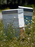Beehives in a Field of Flowers Stock Image