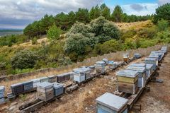 Beehives in a field, hillside Royalty Free Stock Photos
