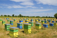 Beehives in a field. And sunflowers and trees royalty free stock image