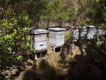 Beehives in the forest Stock Image