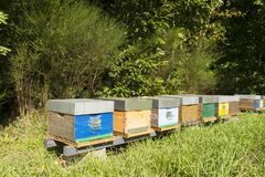 Beehives in forest. Colorful wooden Beehives near the border stock images