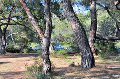 Beehives in forest. In Cyprus Stock Photo