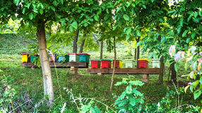 Beehives in the forest Royalty Free Stock Image