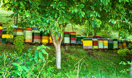 Beehives in the forest. Beehives in the green forest stock photos