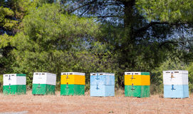 Beehives in forest Stock Photography