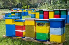 Beehives in forest Royalty Free Stock Photo