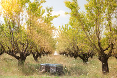 Beehives in the fruits tree garden in Provence, France Royalty Free Stock Photography