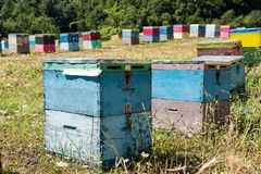 Beehives in Greece. Colorful beehives in a field with trees near Mount Olympus in Greece stock image