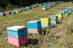 Beehives in Greece. Colorful beehives in a field with trees near Mount Olympus in Greece stock photography