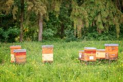 Beehives a green grassy field near a forest Stock Photos