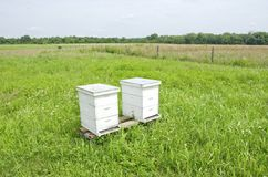 Beehives Stock Photos