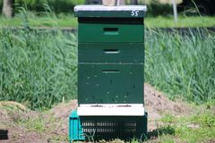 Beehives on land for natural beekeeping in nieuwerkerk aan den ijssel in the Netherlands. Beehives on land for natural beekeeping in nieuwerkerk aan den ijssel royalty free stock image