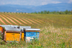 Beehives on the lavender field in Provence, France Royalty Free Stock Image