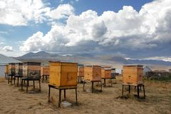 Lots of vintage yellow wood beehives under a huge white cloud in the monastery of St. Nino royalty free stock image