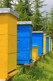 Beehives in a meadow Royalty Free Stock Photos