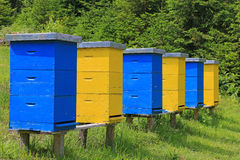 Beehives in a meadow Stock Image