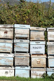 Beehives and trees Royalty Free Stock Photography