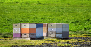 Beehives Next To Green Grass Field. The man made beehives use bees to pollinate crops and make honey in this apiary Royalty Free Stock Images