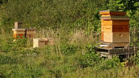 Beehives Next to an Orchard stock video footage