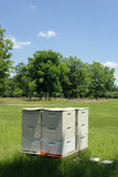 Beehives by an Orchard. Beehives next to an orchard, used for natural pollenation Stock Photos