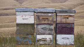 Beehives, Otago, New Zealand Royalty Free Stock Images
