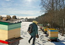Apiarist in winter season. Stock Photography