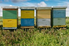 Beehives. Outdoors on the meadow stock photography