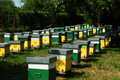 Beehives. Painted wooden beehives with active honey bees royalty free stock image