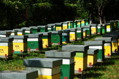 Beehives Royalty Free Stock Photos