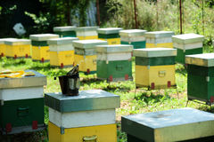 Beehives Stock Photo