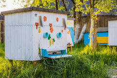 Beehives in the private apiary Royalty Free Stock Images