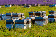 Beehives in Provence at France Stock Photography