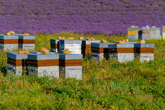 Beehives in Provence at France Royalty Free Stock Photos