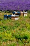Beehives in Provence at France Royalty Free Stock Images